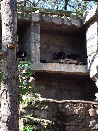 Tiergarten Schoenbrunn - Zoo Vienna : Zoo Wien