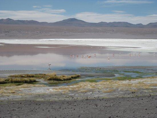 Laguna Colorada : The lake