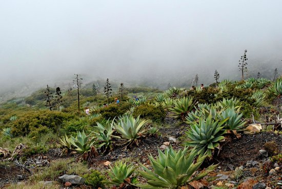 Santa Ana Volcano: I enjoyed the fog and mist. It was like being on another planet.
