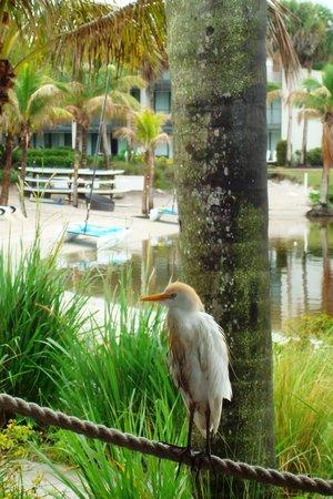 Club Med Sandpiper Bay : Dinner guest