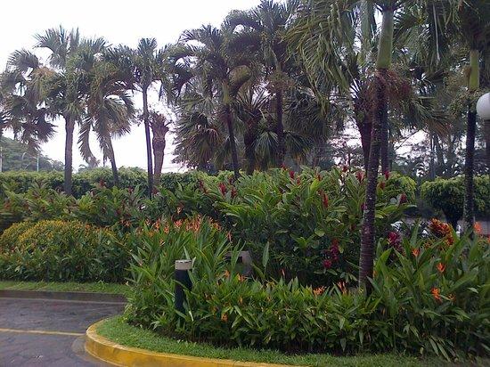 Sheraton Presidente San Salvador: vegetación a la entrada