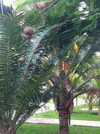 Uroa Bay Beach Resort : nel curatissimo giardino...palme abitate!