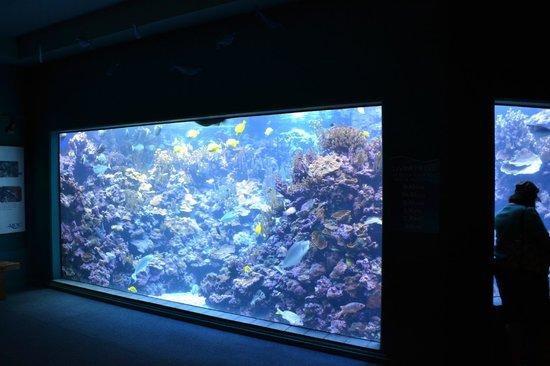 Maui Ocean Center: mais aquários