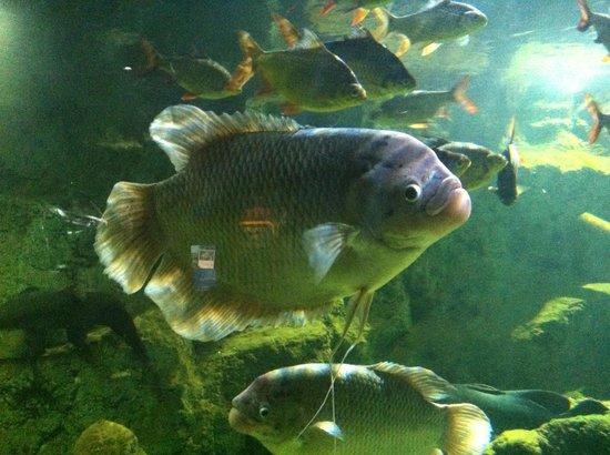 SEA LIFE London Aquarium: fishing