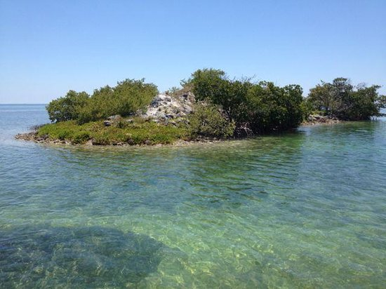 Clearly Unique Charters: One of the few coral islands beyond the shore - most are mangroves.