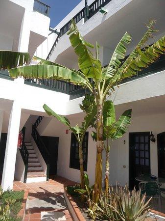 Molino de Guatiza Apartments: pianta tropicale