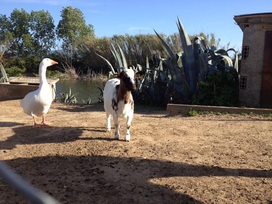 Animali al laghetto foto di locanda le mandriane for Animali per laghetto