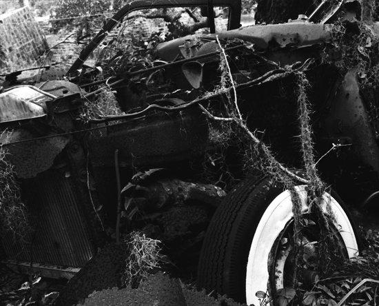 Cumberland Island National Seashore: derelict automobile mamiya 2