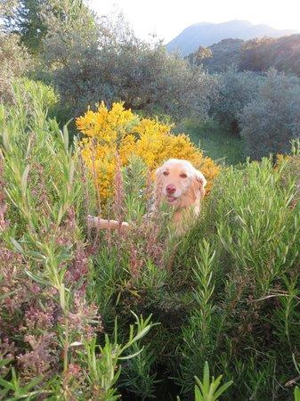 Casa Olea: Ruby in the garden
