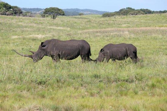 iSimangaliso Wetland Park: Rhinos