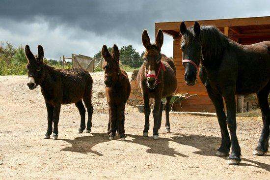 Monte da Teima: Some of our animals
