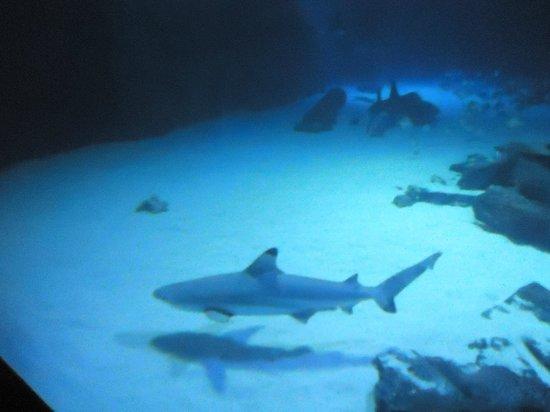 SEA LIFE London Aquarium: Sharkd