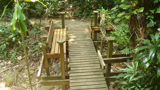 Carambola Botanical Gardens & Trails : Troll Bridge