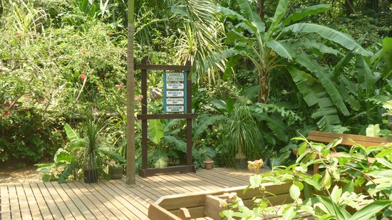 Carambola Botanical Gardens & Trails : Choose a path