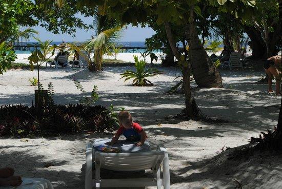 Adaaran Select Hudhuranfushi: Иногда тут бегают местные животные, птицы и летают летучие собаки или мыши