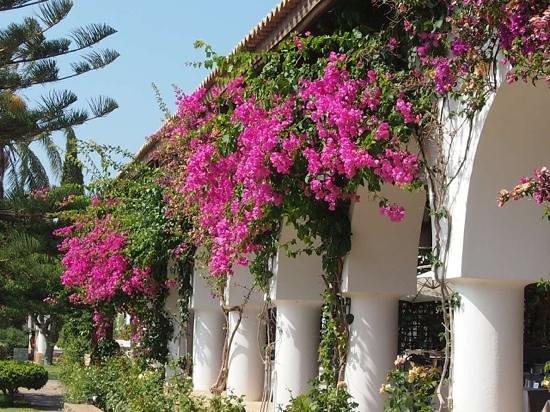 Minos Beach Art hotel: Détail exterieur restaurant Minos beach Art Hôtel