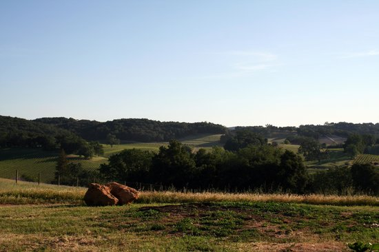 Orchard Hill Farm: Views of surrounding vineyards