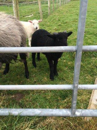Irish Famine Cottages: More pals
