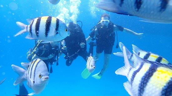 Diving Ocean Makadi Bay : Подводный мир