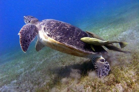 Diving Ocean Makadi Bay