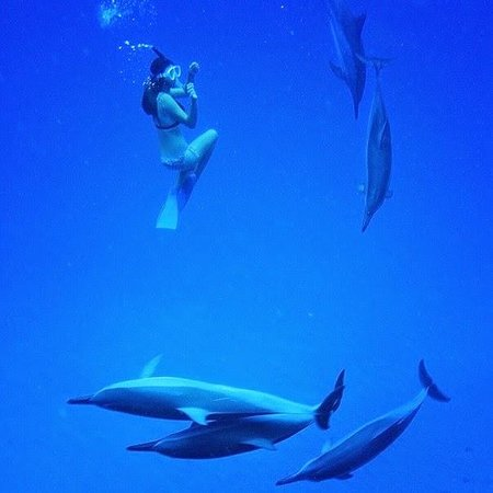 Dolphins and You: Swimming with wild dolphins!