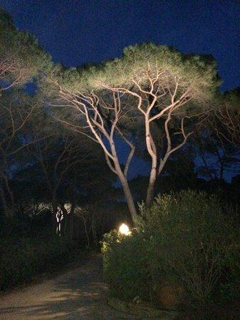 Roccamare Resort: Pinewood