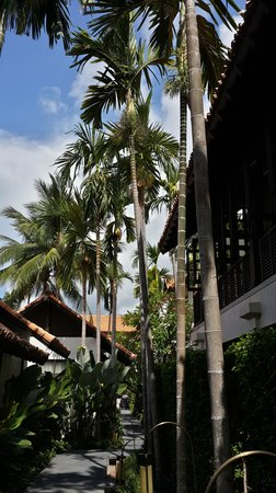 Le Meridien Koh Samui Resort & Spa : to the rooms