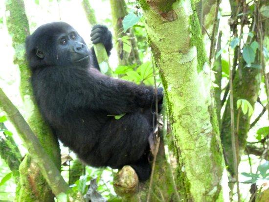 Nkuringo Bwindi Gorilla Lodge: A little guy!