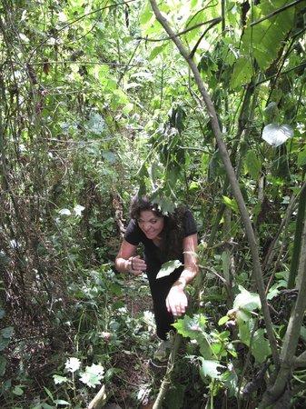 Nkuringo Bwindi Gorilla Lodge: The Bwindi Impenetrable Forest