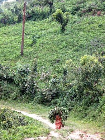 Nkuringo Bwindi Gorilla Lodge: On our hike.