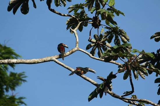 Rana Roja Lodge: Fighting in the Trees