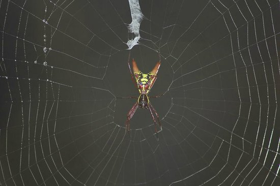 Rana Roja Lodge: Cool looking Spider