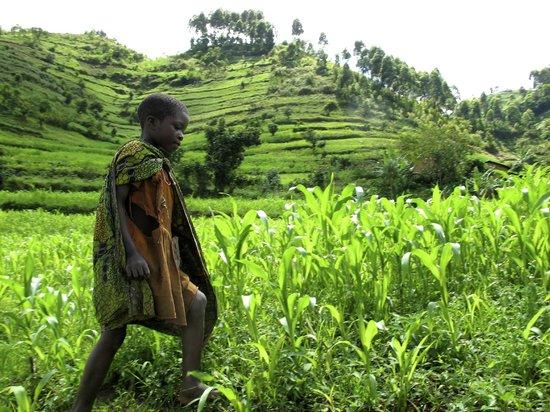 Nkuringo Bwindi Gorilla Lodge: The Camp is near so many villages.