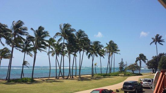 Coconut Coasters Beach Bike Rentals : veiw from restaurant