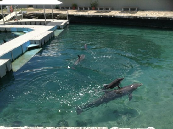 National Museum of Bermuda : Dolphin Quest