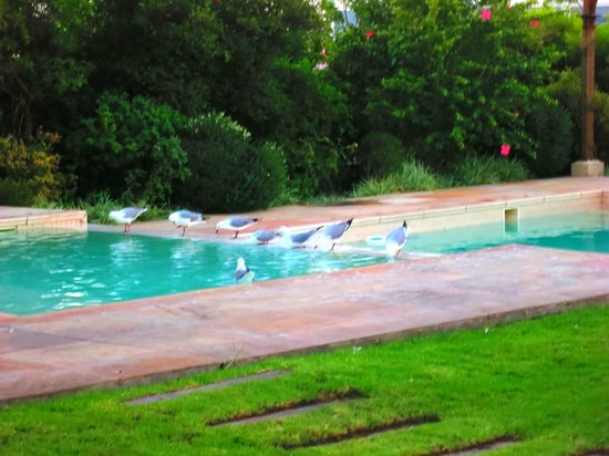 Dock House Boutique Hotel: Piscine