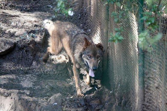 Zoo de Santillana: No para