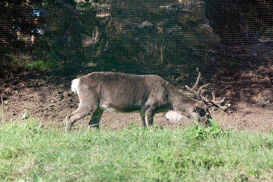Zoo de Santillana: Buen provecho