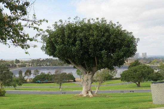 Pacific View Memorial Park and Mortuary : The Duke is 30 steps to the right of tree