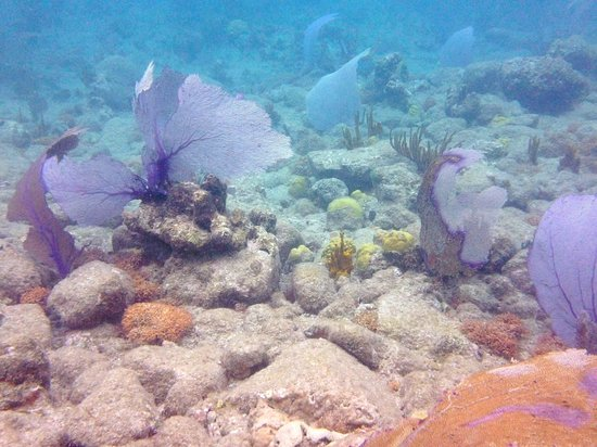 Kekoa Sailing Expeditions: soft coral