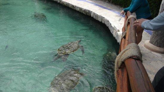 Xcaret Eco Theme Park: Tortugas