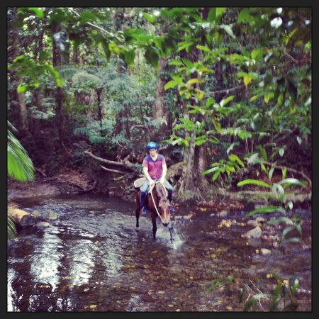 Cape Tribulation Horse Rides: Loved it!