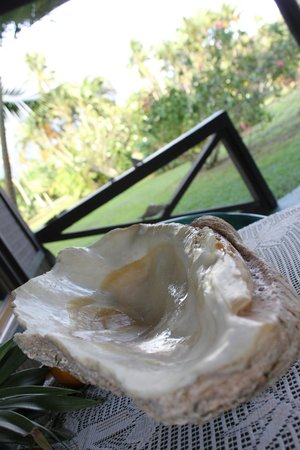 Bibi's Hideaway: giant clam shell we found