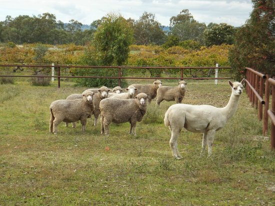 The Paddocks: all eyes on the camera