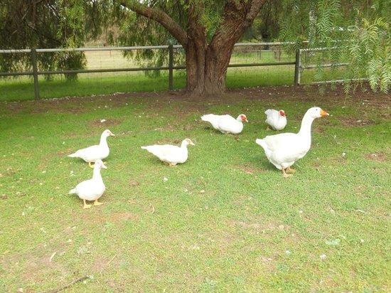The Paddocks at Whistler Farm : having a wander around the farm