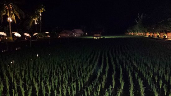 Sardine: view of the rice paddy that backs the restaurant with mood lighting at night