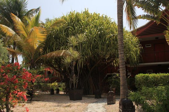 Palm Court Hotel: the palm tree