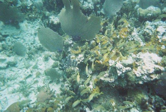 Sandals Negril Beach Resort & Spa: Snorkeling