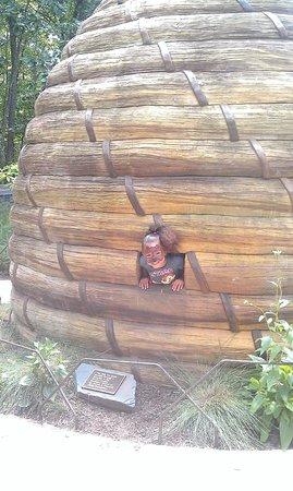 North Carolina Zoo: Bee Hive