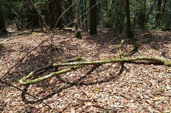 Mawphlang Sacred Forest : Lovely